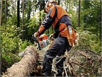 Forestry Chainsaws