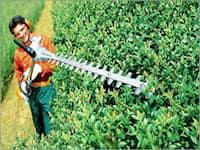 Extended Length Hedge Trimmers