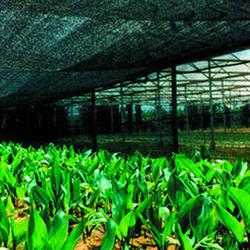 Greenhouse Net 70% For Cultivation Of Ornamental Plant