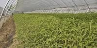 Consulting Services For Agriculture And Horticulture